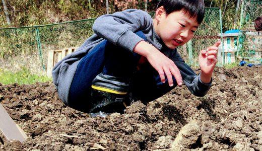 ジャガイモ掘りパート1