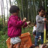 竹林の整理