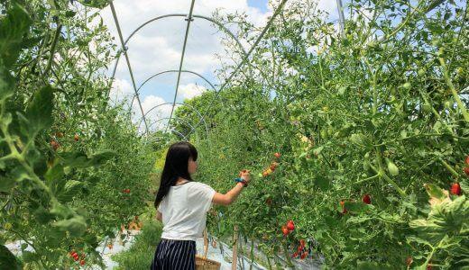 トマトのトンネル