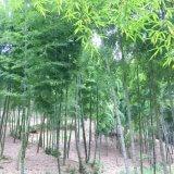 タケノコ畑の肥料