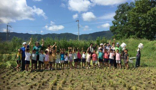 2019年度 稲刈り1