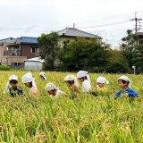 2021年度 稲刈り